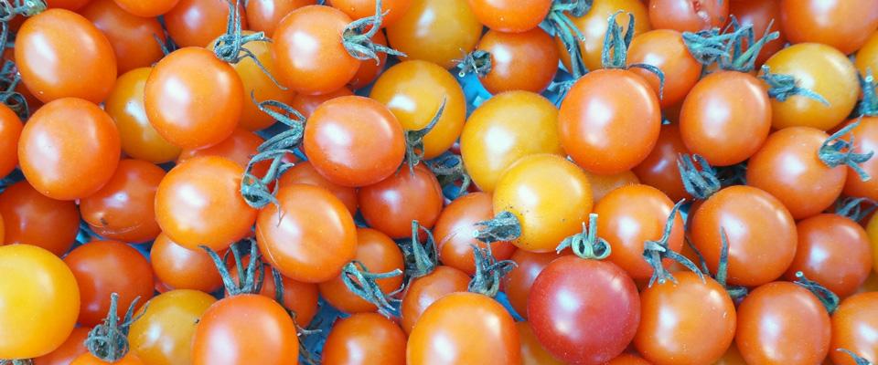 自然栽培 トマト