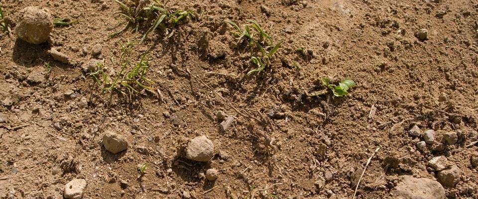 土にいる微生物
