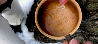 Maple syrup メイプルシロップ ハンティング