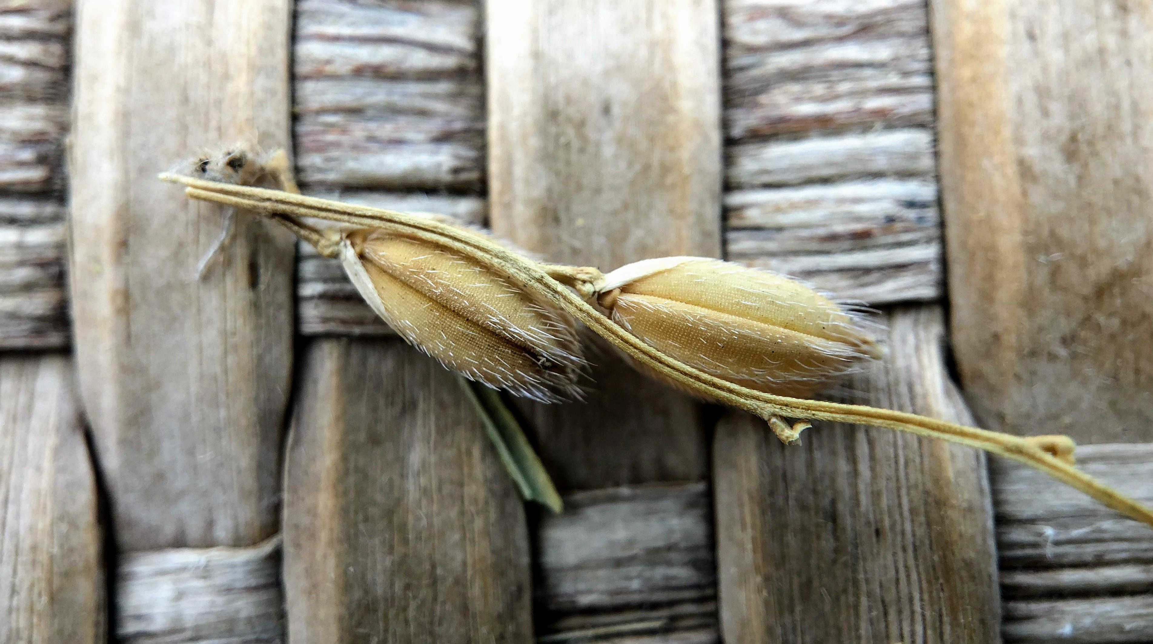 自然栽培のお米を作る八十八手と田んぼの物語