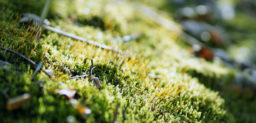 苔 – moss